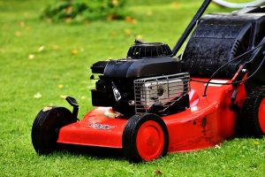 cut the lawn